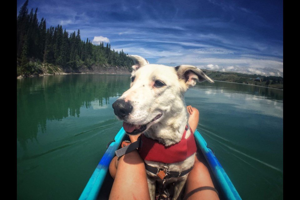 Need a hiking partner? Why not try one with four legs! Christine Newman's Hiking and Paddling with Adoptable Dogs is a collection of photographs featuring dogs from the Cochrane and Area Humane Society.