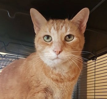 Adopt Me: Joey deserves a loving home for his golden years (adopted) - CollingwoodToday.ca