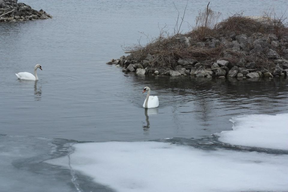 28052018-Swans-EE