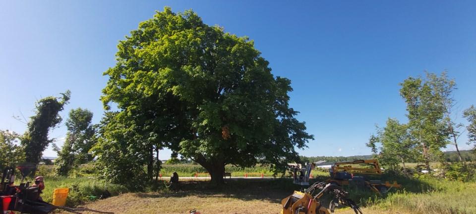 2020_07_31 Tree Trust_2_JG
