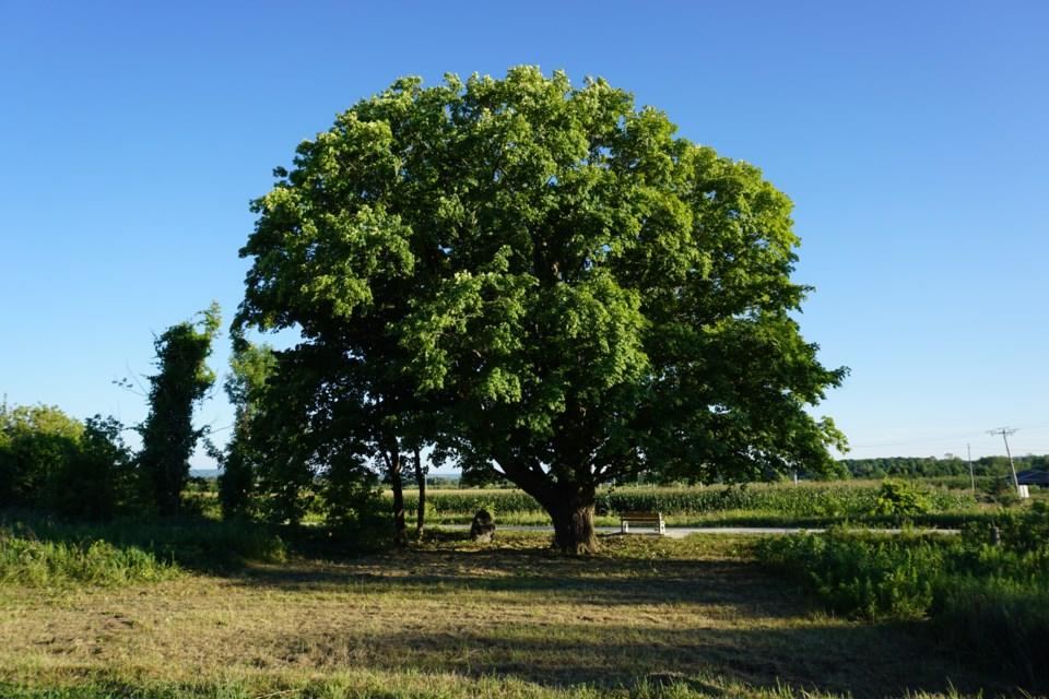 2020_08_01 Tree Trust After_3_JG