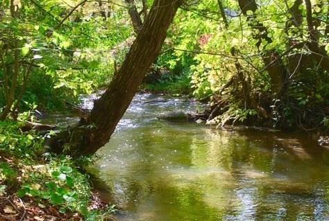 CollingwoodToday Spotlight image_Save Silver Creek