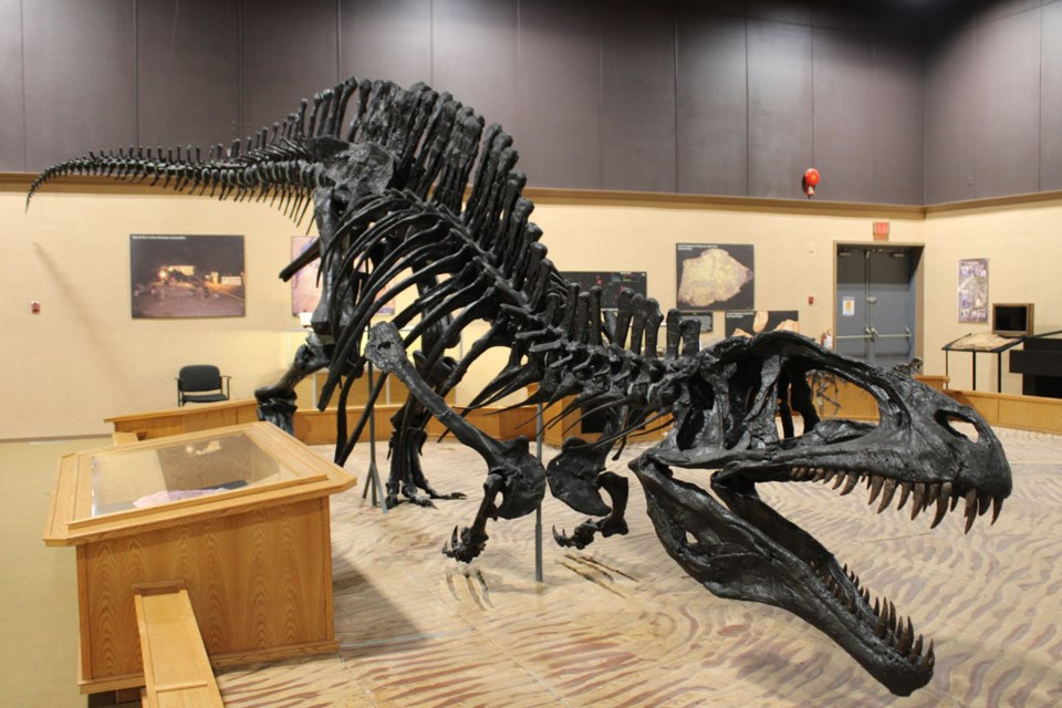 A replica of a Torvosaurus, just one part of the rich prehistoric findings in Tumbler Ridge - March 12