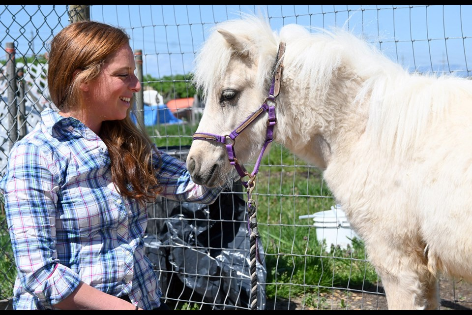 """Tiny Tales Pony Rescue Society owner Tara Pay with her rescued guest """"Frosty"""" at the East Ladner stables."""