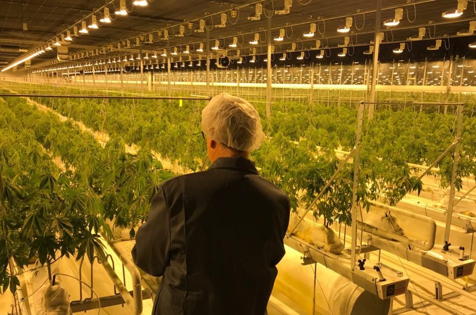 bc cannabis association