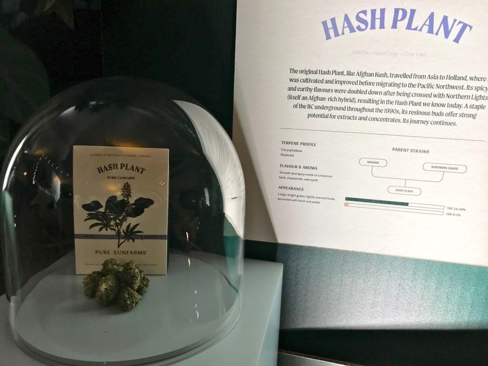 Pure Sunfarms cannabis grow operation in Delta, BC
