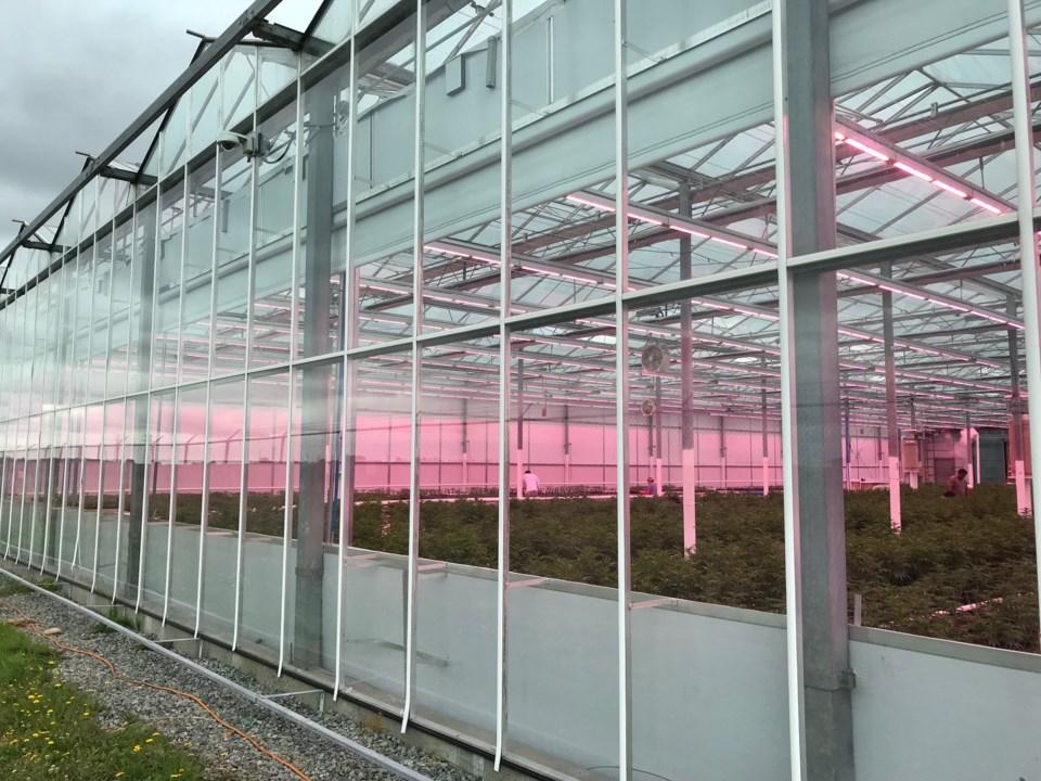 rubicon greenhouse 2
