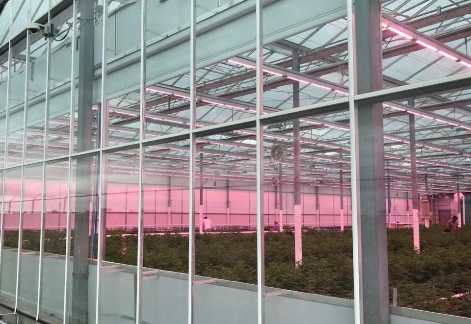 Rubicon Organics greenhouse Delta, BC