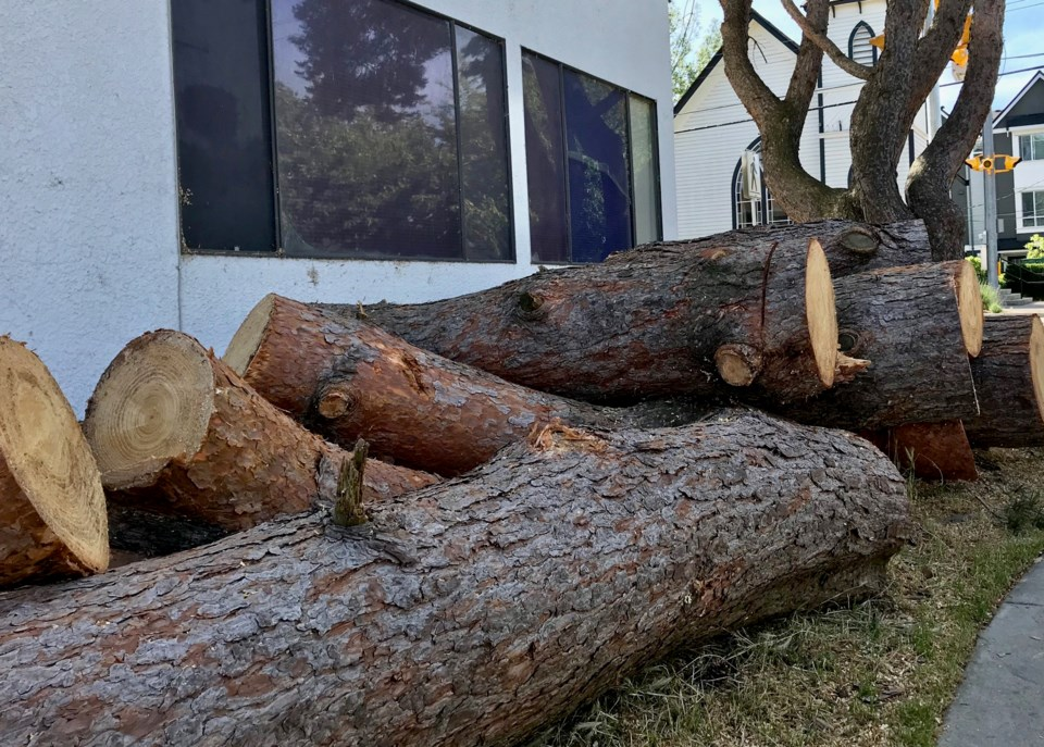 delta, bc tree bylaw changes