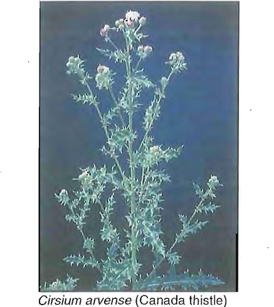 delta invasive plants