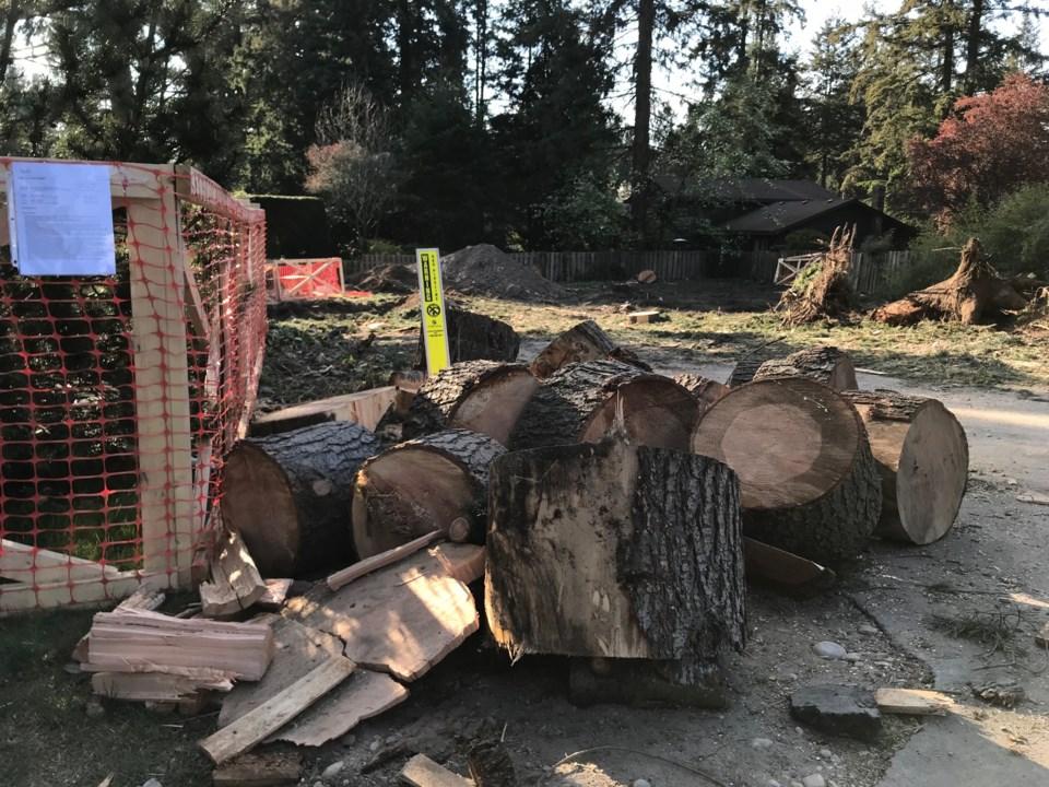 delta trees tree protection bylaw