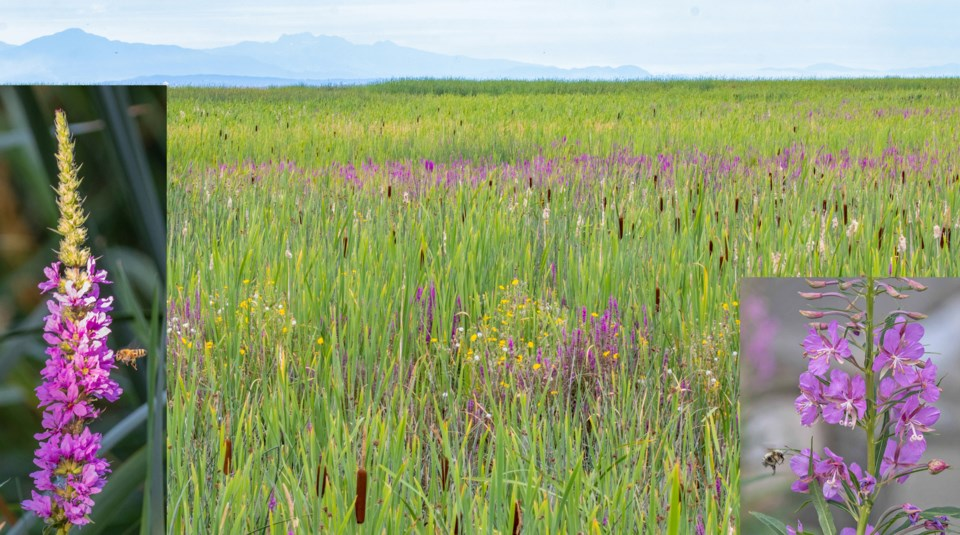 Nature notes delta marshland
