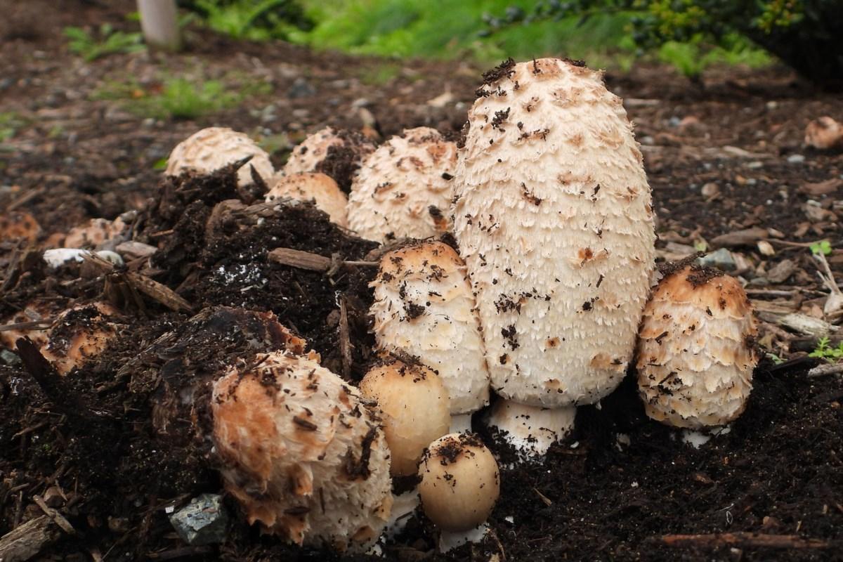 Nature Notes: the magic of mushrooms