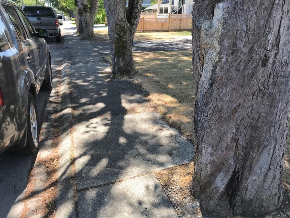 trees damaging ladner driveways