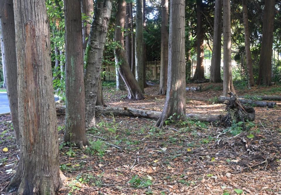 Winskill Park trees