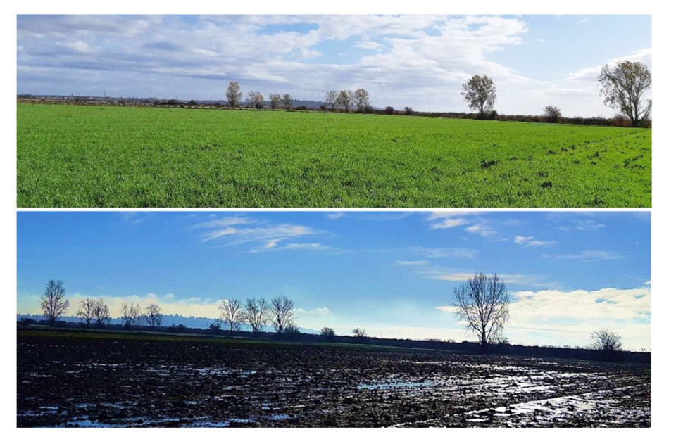 winter cover crops dfwt