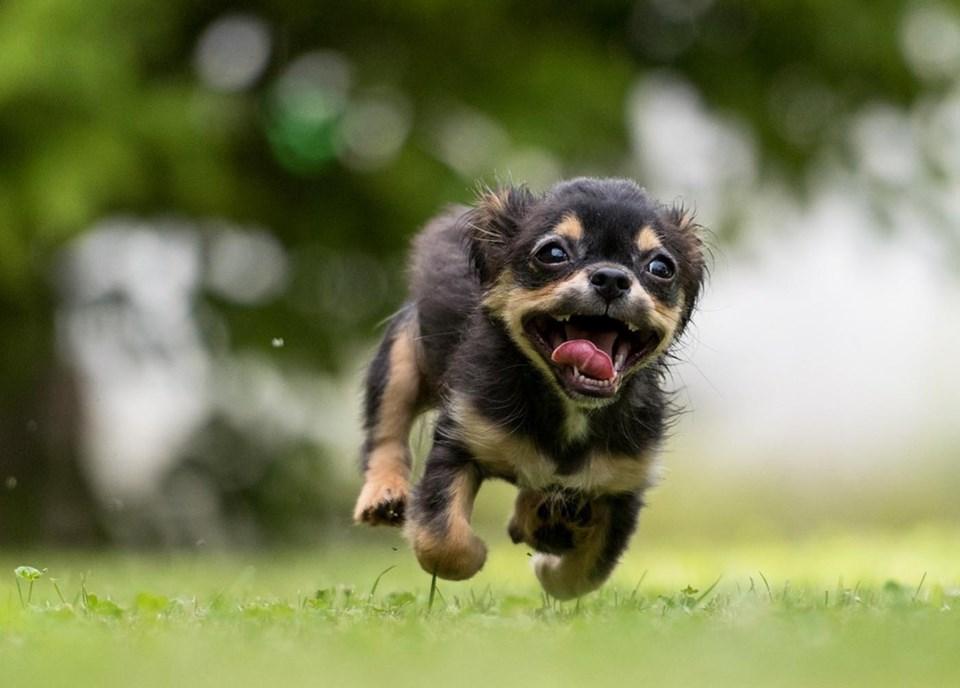 delta off-leash dog parks