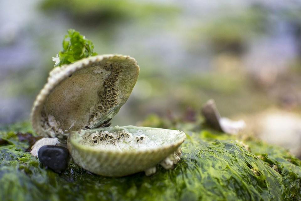 harvie letter illegal shellfish harvesting