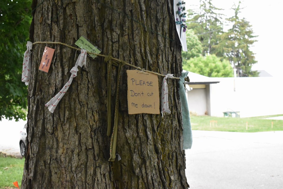 Neighbours have begun decorating the tree with messages of support and with rags as a Scottish pagan tradition.