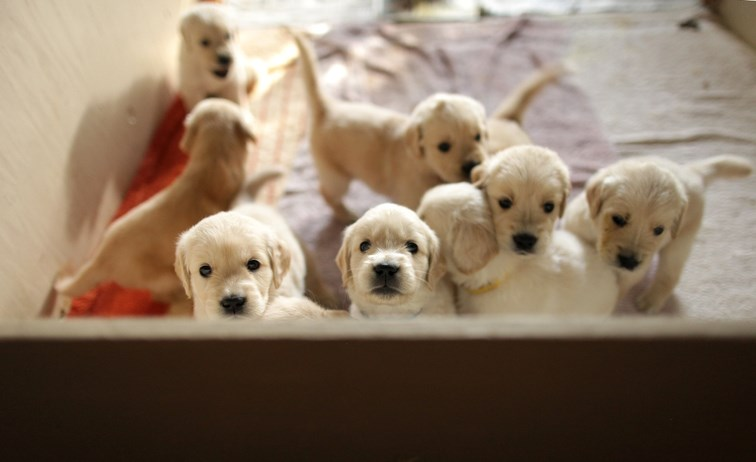 puppylitter
