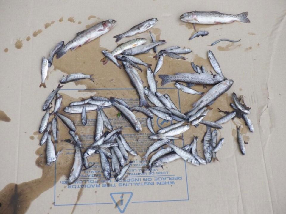 Stoney Creek fish kill