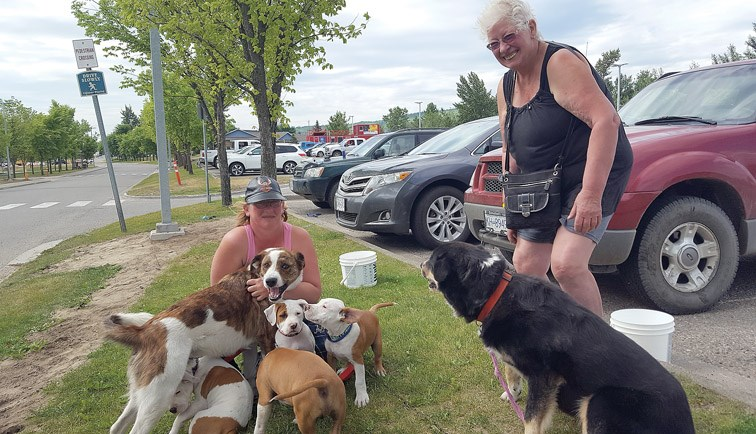 Nadina Doyle, left, poses with her her mother, Heather Klassen, their four Staffordshire bull terrier puppies, a boxer/bull mastiff cross, and a Rottweiler cross Sunday morning after they spent the night Saturday at the Prince George wildfire evacuation centre at the College of New Caledonia. Evacuees from forest fires south of the city are being lodged at the CNC gymnasium and Charles Jago Northern Sport Centre at UNBC until the fire danger will allow them to return to their homes in the Cariboo.