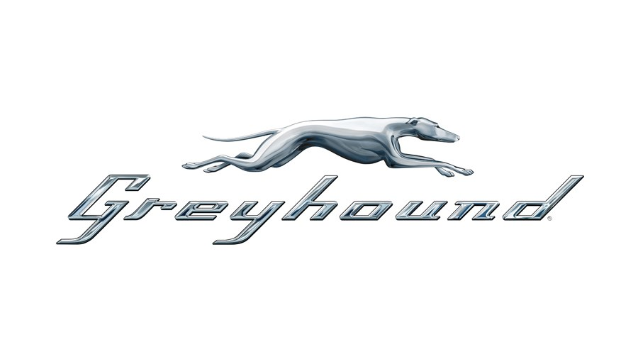 greyhound for web