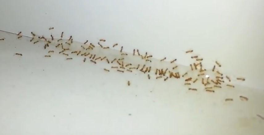 Blog What Are Those Teeny Weenie Ants Delta Optimist