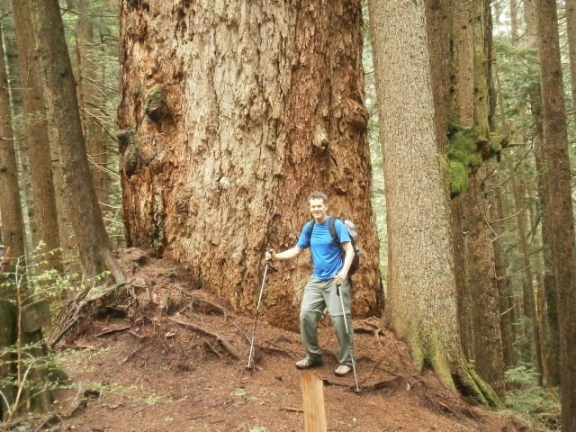 The Hollyburn Fir survived the axe and saw of the early 1900s because local loggers were mostly interested in cedar trees for shingles. It was re-discovered in the mid-1980s when the province was compiling a Big Tree Registry. Photo Mike Hanafin