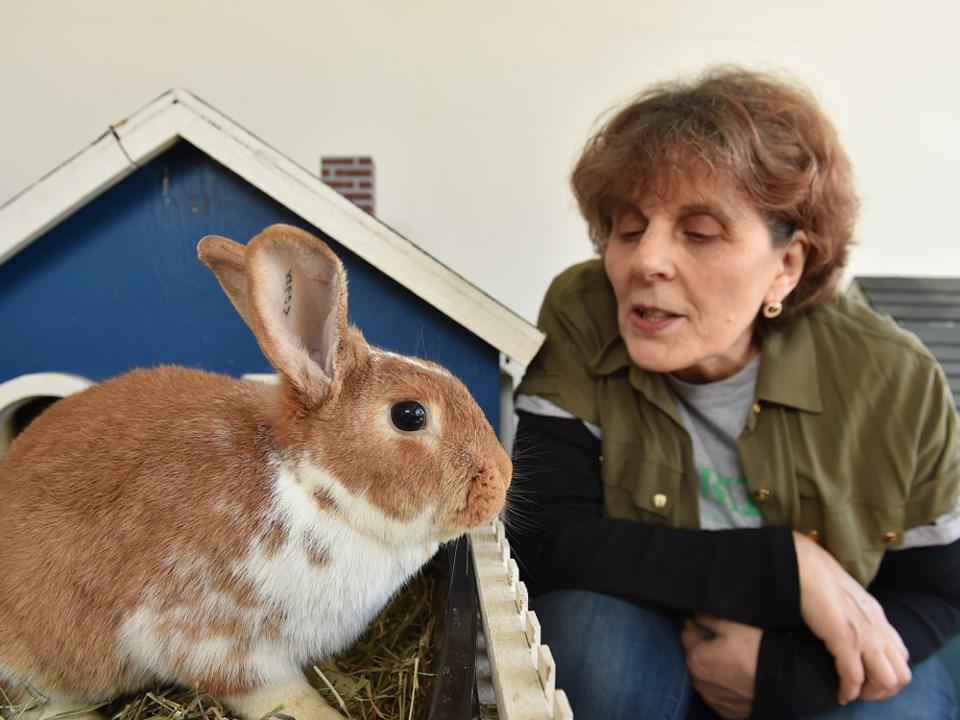rabbit fundraiser
