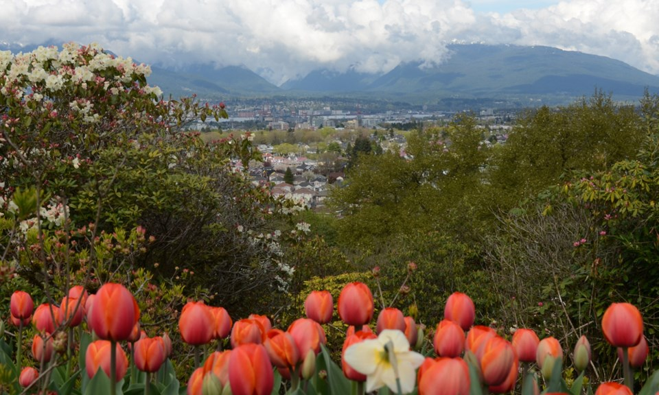 Vancouver clouds spring tulips rhododendron
