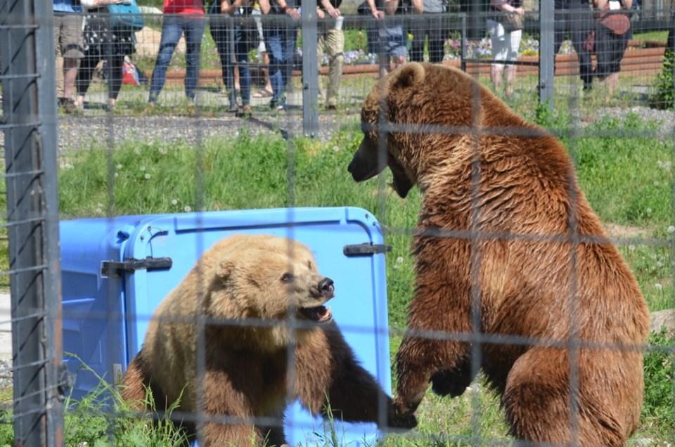Bear bins MP