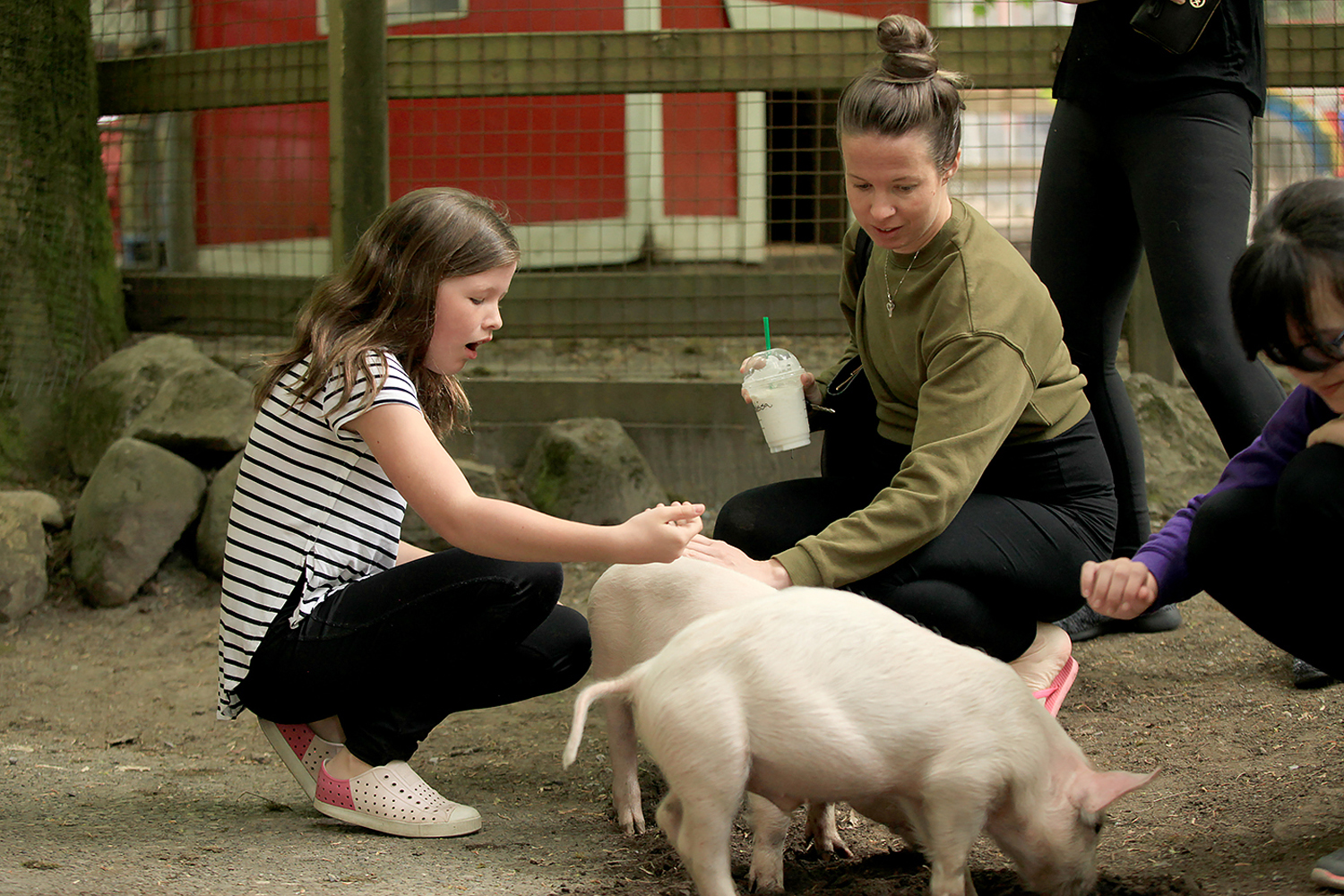 Queen S Park Petting Farm Opens For The Season In New West Photo Gallery New West Record