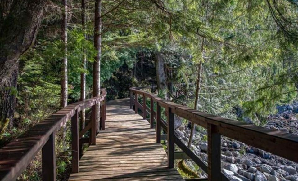 Stuart Island forest path