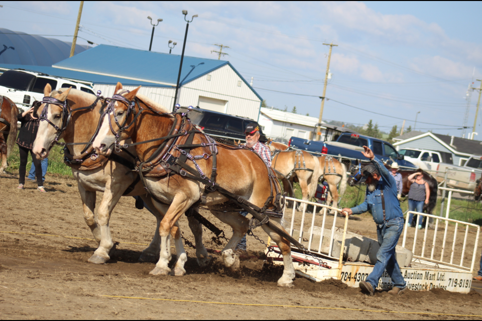 Calvin Buchter's horses pulled 7,000 lbs on Sunday to be the last horses pulling and take the title. That's 3,3370 lbs over their team weight.