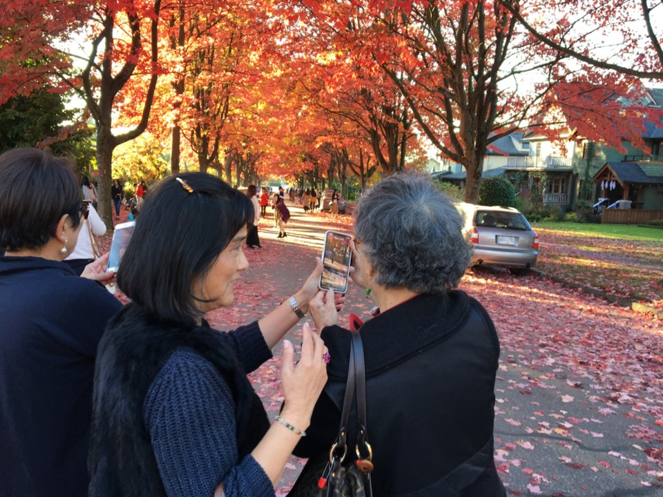 The vibrant autumn leaf show along Cambridge Street is popular among locals and tourists this time o