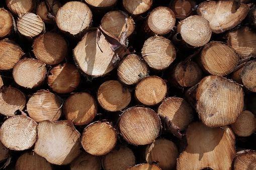 lumber-curtailments.15_1114.jpg