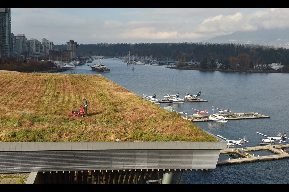 Landscaping crews undertook the annual mowing of the green roof at Vancouver Convention Centre in October. It takes about two weeks to trim and mow the six-acre living roof. Photo Dan Toulgoet