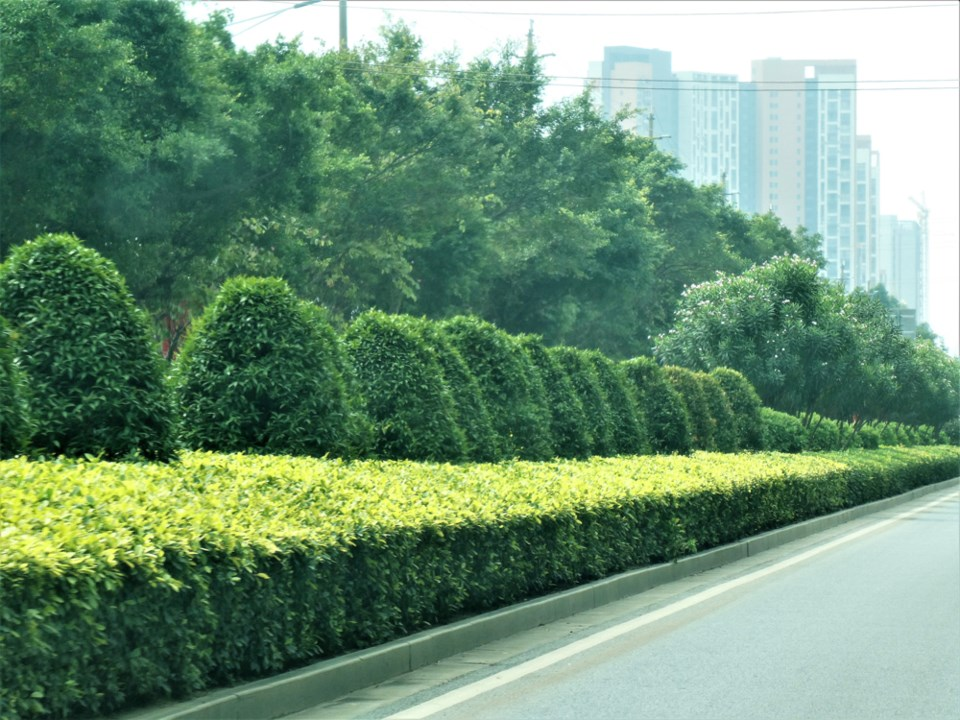 An example of the beautiful landscaping found along many major streets in Nanning. Photo Michael Gel
