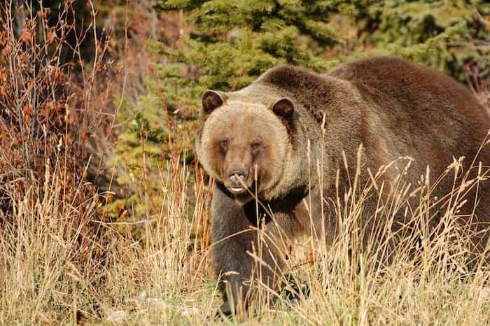 Boo the bear