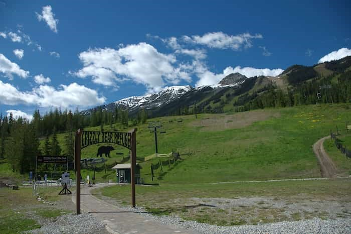 The grizzly bear refuge in Kicking Horse