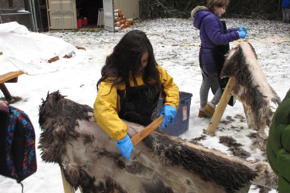 Sea to Sky Learning Connections students scrape the fur off deer hides at Alice Lake, on traditional deer hunting grounds.