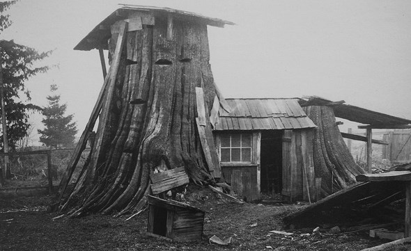 A different kind of tree house (Vancouver Archives)