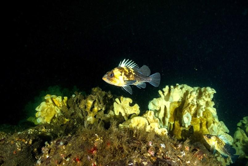 Sponge reefs