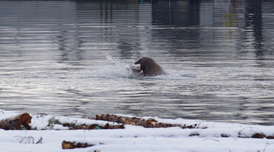 NEW 3 Sea Lion & Sturgeon (3).jpg