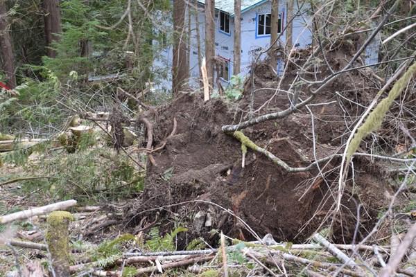 Sandy Hook Logging