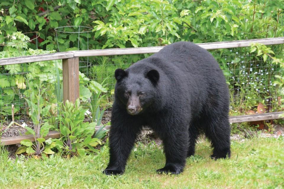 bear sightings
