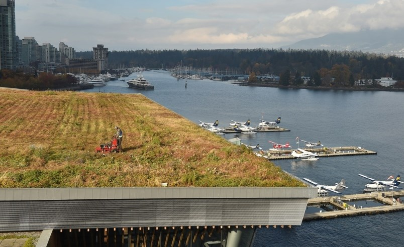 Landscaping crews mow the green roof at Vancouver Convention Centre once a year. It takes about two