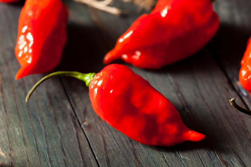 Hot n Saucy Gourmet Flavours