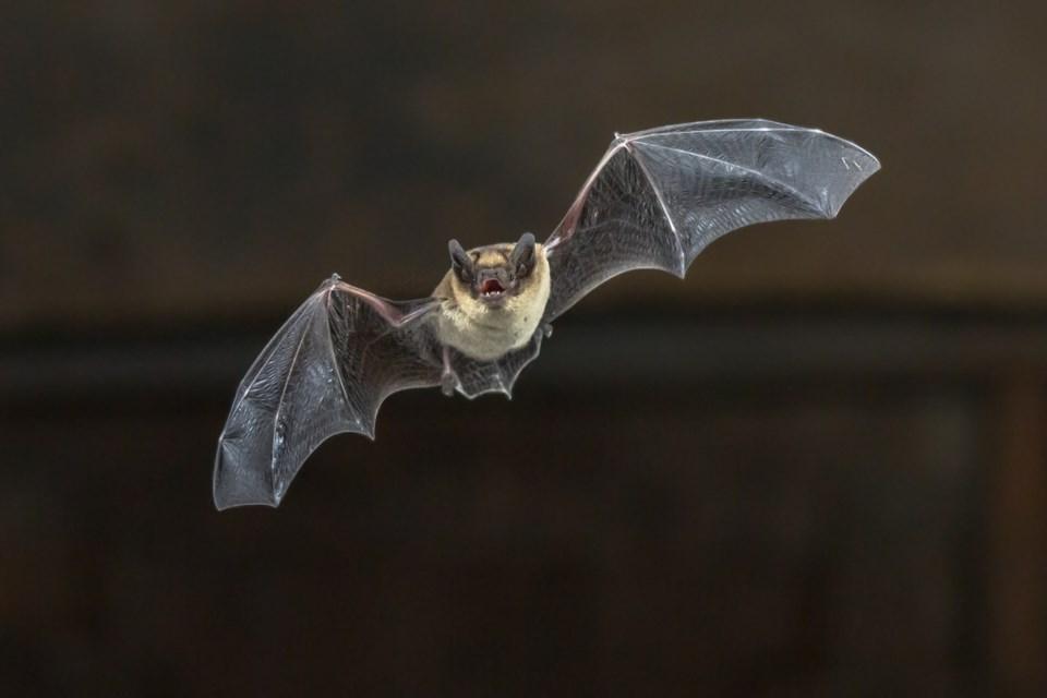 bat threat